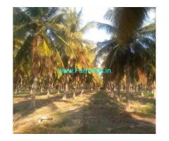 2 Acres Coconut Farmland for Sale at Karatholuvu