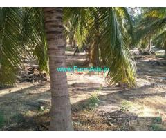 10 Acres Coconut Farm for Sale at Gudimangalam