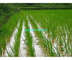 98 Cents Agriculture Land for Sale near Bhimavaram