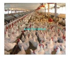 Poultry Farm for Sale near Shankarampet
