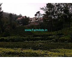 1.90 Acres Tea Estate for Sale at Thumminitty,Doddabetta