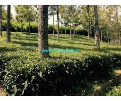 8 Acres Tea Estate for Sale near Kotagiri,Ooty Kotagiri Road