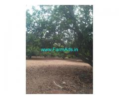 10.50 Acres Mango Farm for Sale near Padmapuram,Veerakanellore