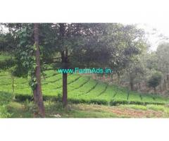 1 Acre Tea Estate for Sale near Thalapuzha,Kannur Airport