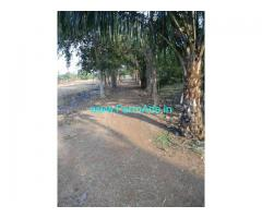 15 Acres Palm oil Plantation with plain Land for Sale at Parvatapuram