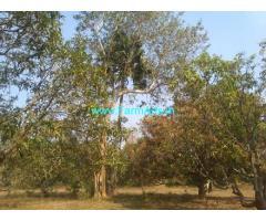 1 Acre Mango Farm Sale near Devupalli,Bondapalli Police Station
