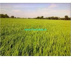 70 Cents Agriculture Land for Sale at Pithapuram,Navara Pavara Road