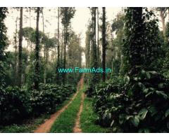 20 Acres Coffee Estate for Sale at DevarShola