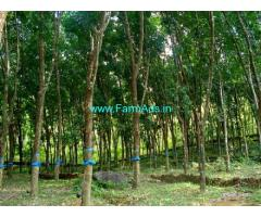 50 Cents newly marked rubber plantation sale at Edamon,Punalur