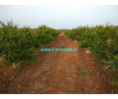 Handri Neeva canal irrigated 100 Acres Farm Land for Sale at Kambadur