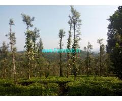 5 Acres Tea Estate for Sale near Makkiyad,Etheme Park