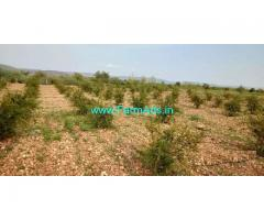 6 Acres Fruit Farm Land for Sale near Kadapa Express highway