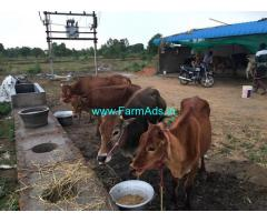 11.60 Acres Agriculture Land with dairy farm setupfor Sale at Melpudari