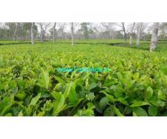 1746 Acres Tea Estate For Sale in Vagamon