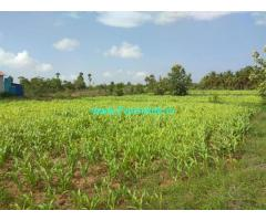 4.5 Acres Coconut Farm with House for Sale at Pollachi