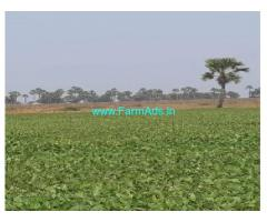 80 Cents Agriculture Land for Sale at UpparaGudem