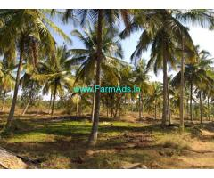 3 Acres Coconut farm available for sale at Hassan district, Belur taluk