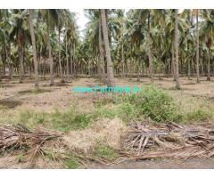 10890 sq ft Coconut Farm Sale near Theni, Vpr College