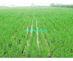 3.75 Acres Agriculture land for Sale in Bonala,Ramayampet Gajwel Road