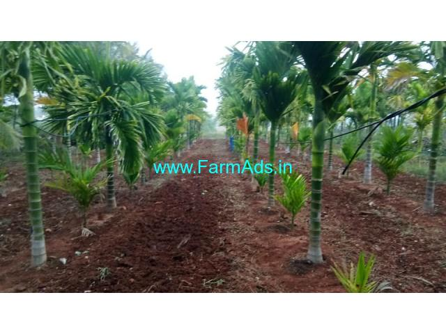 4.16 Acres maintained Areca Farm Land for sale at Hoovinahole, Hiriyur