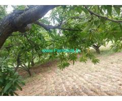 3 Acres Mango Farm for Sale near Tirupathi