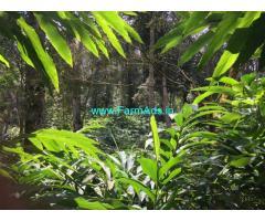 56 Acres Cadamom plantation for sale BLAMALA NEAR PERIYAR.