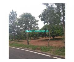 Mango Farm land for sale. mysore to land 24 km bogadi gaddige route.