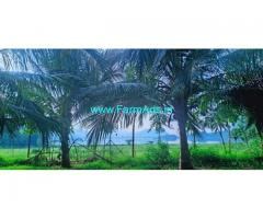 5 Acres Coconut Farm for Sale in Palani