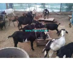 5 Acres Well established Dairy,Poulty,Goat Farm for Sale near Pattom