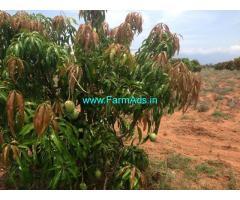 13 Acres Of Certified Developed Organic Farm For Sale Near Tirunelveli