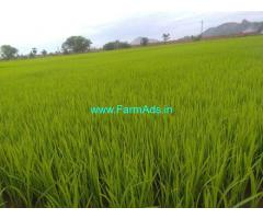30 Acres Agriculture farm for Sale near Warangal