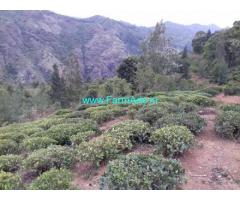 100 Acres Tea Estate for Sale at Ooty