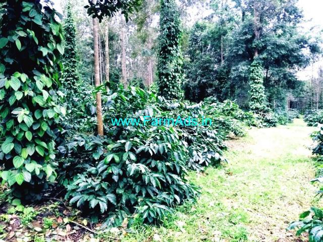 5 Acres well maintained coffee estate for Sale in Alur - Hassan
