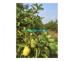 8-acres,Jama-mamidi thota
