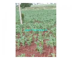 13.5 Acres Agriculture Land for Sale near Bhongir
