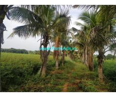 6 Acres Farm Land for Sale near Doulatabad,Bijapur Hyderabad highway