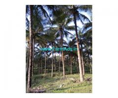 Attappady, Mannarkar -  Kerala. 6.75 acres coconut farm for sale.