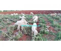 7.5 Acres Agriculture Land for Sale near Attapady