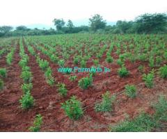 10 Acres Agriculture Land for Sale near Kadapa
