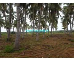 24 Acre Coconut Farm Land for sale at Tirunelveli.