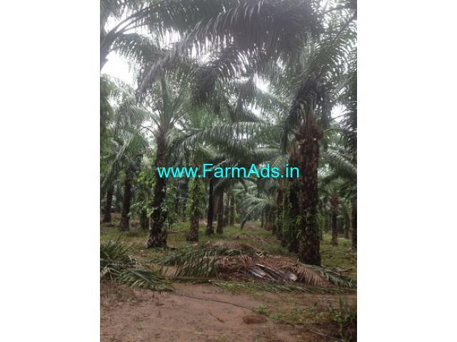 27 Acres Palm Oil Farm for Sale at Parvathipuram