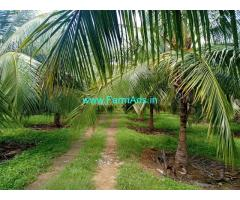 5 Acres coconut farm land for sale at Udumalapetai sub district.