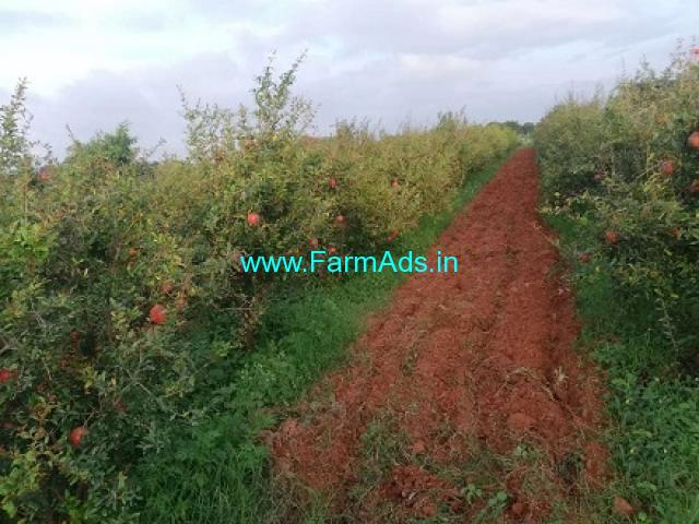 25 Acres Fruit Garden Land for Sale near Chittoor