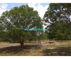 12.44 Acres Farm for Sale near Nellore