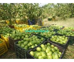 5 Acres Agriculture land for Sale near Theni
