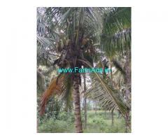1 Acre Coconut Farm For Sale near Attapady