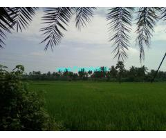 85 Cents Agriculture Land for Sale near Tadepalligudem