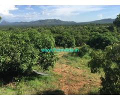 20 Acres Mango Farm with Farm House for Sale near Ramanagar