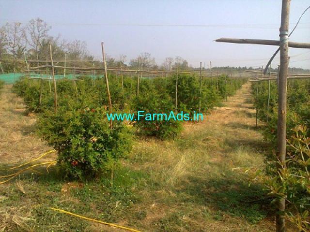 5.16 Acres Pomegranate Farm for Sale near Tumkur