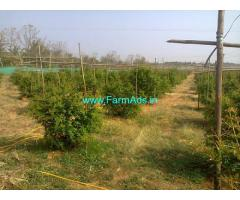 5.16 Acres Pomegranate Farm for Sale near Tumkur